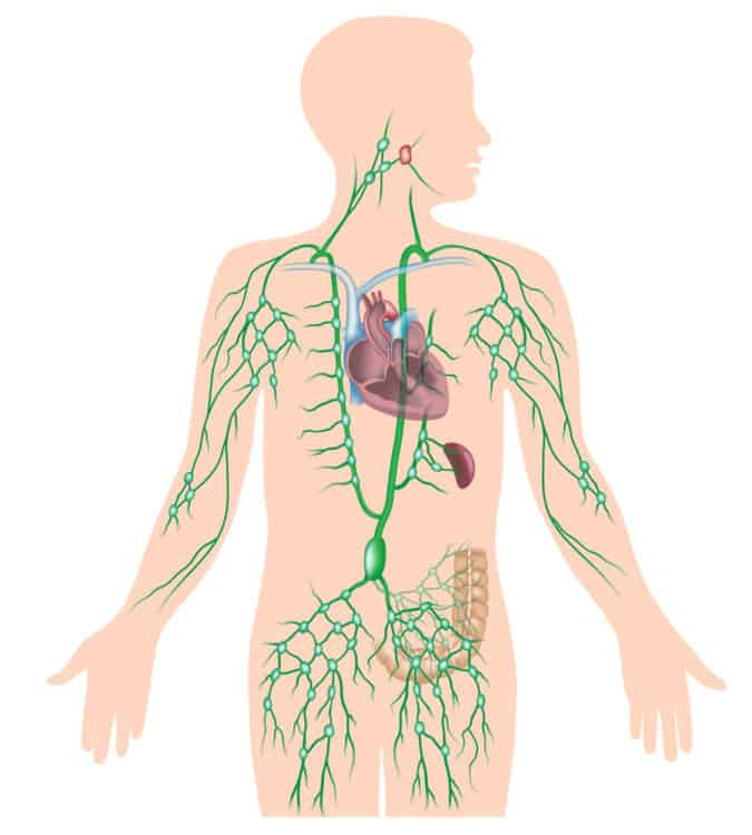 The Powerful Exercise That Drains Your Lymphatic System Boosts