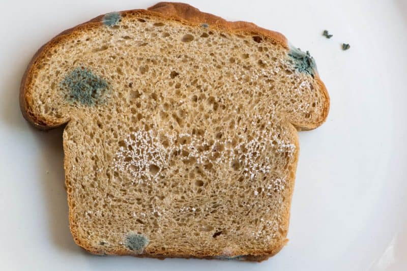 Early Stage Of Mold On Bread