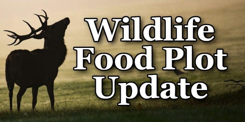 Wildlife Food Plot Update - Thistle Downs Farm